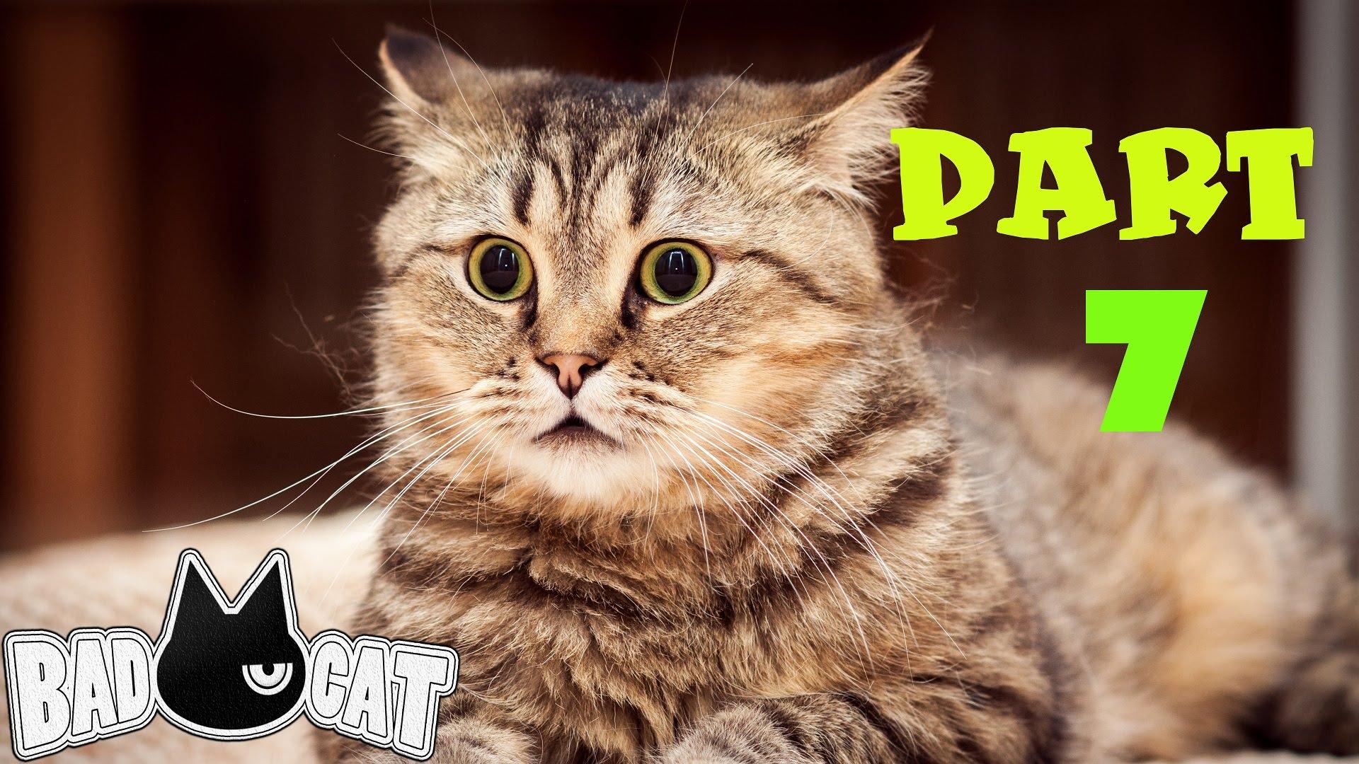 Удивленные котенки  № 1097852 без смс