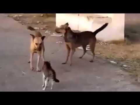 Laughing animal gif