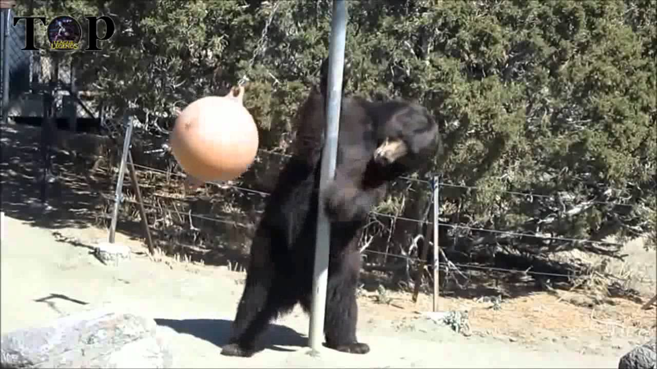 funny animal   best funny animals compilation 2013 epic