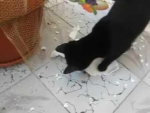 talking white cat toy